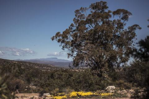 Namaqualand Flower Festival view